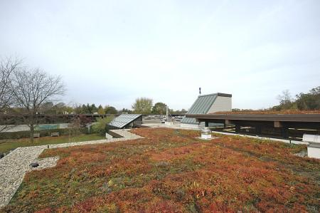 GreenHills School green roof