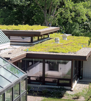 green-roof2