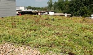 greenhills-green-roof-m